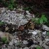 Planinarenje - Oštrc i Japetić 6.4.2014._2